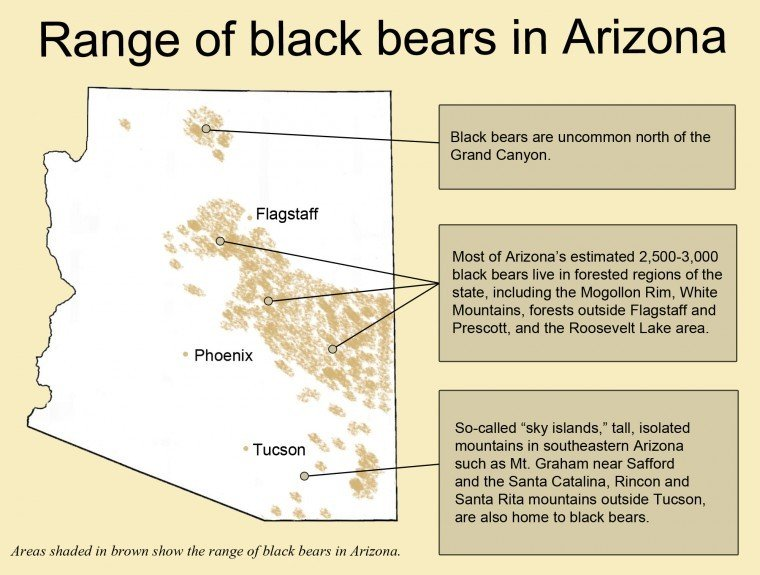 Range of black bears in Arizona