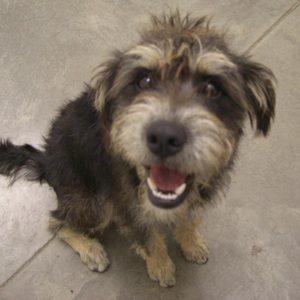 Pet of the Week: Riley