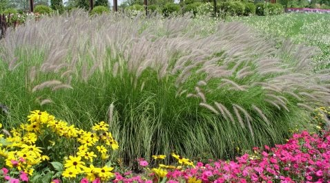 Discover the magic of ornamentals 