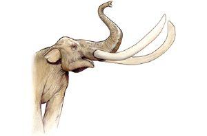Mammoth bones not alone at Gilbert site
