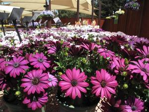 Gardening-Buying Smart