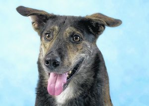 Pet of the week: Wrigley loves people, not driving