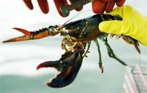 Deadliest catch? Lobster wars rock Maine