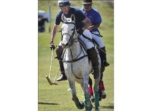 E.V. polo lovers say game is esoteric, but hardly elitist