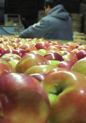 Food and Farm Sleeping Apples