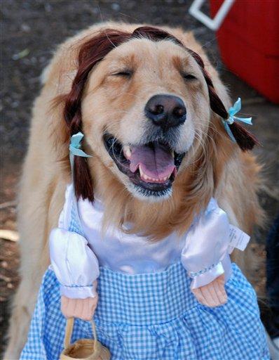 Pets-Halloween