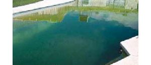 Mosquito fight targets pools