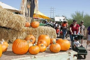 Desert Botanical Garden offers pumpkin pickin' fun