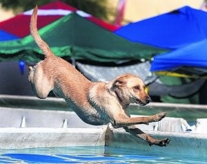 WestWorld hosts doggone agility event