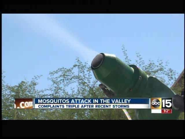 Mosquitoes swarm Valley after recent rains