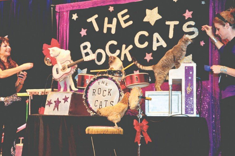 The Amazing Acro-Cats