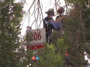Mesa tree trimmer dies