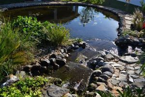 Spring Homes-Backyard Ponds