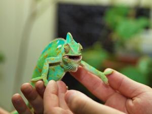 reptile rally