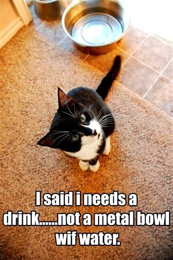 Pets-Internet Cat Stars