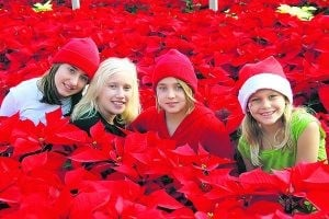 Poinsettia festival celebrates signature holiday flower