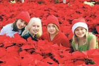Poinsettia Festival in Phoenix Dec. 12-14
