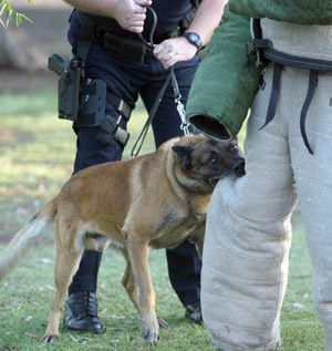 K-9 teams will face off at trials