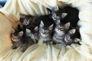 Homeless kittens