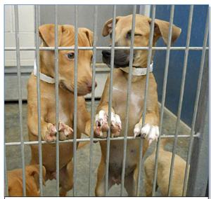 Maricopa County animal shelters overcrowded