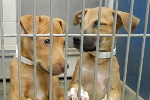 The Deadly Consequences of 'No-Kill' Policies
