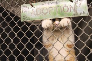 Animal euthanasia: Easy solution, difficult problem