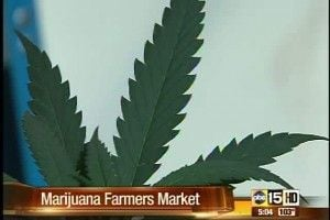 Marijuana in Southern Arizona