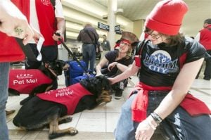 Pets Airport Therapy Dogs