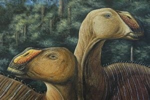 Fiercer duck-billed dinosaur discovered near Arizona border