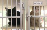 Cat intakes overwhelm Humane Society