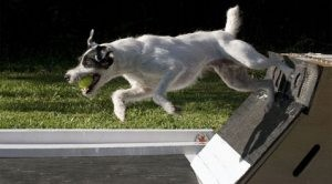 Canine competition unleashed at WestWorld