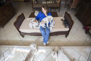 <p>Sharon Hampton of Westie and Friends AZ Rescue in Mesa on Thursday, Oct. 23, 2014.</p>