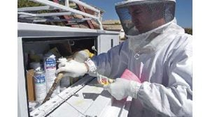 Bees expected to be menace this year