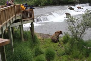 Travel-Trip-Alaska-Katmai Bears