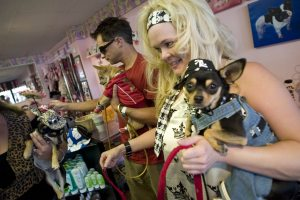 Canine fashionistas put on the dog at style show