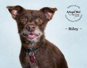 Take me Home: Well-mannered Riley  is sweet and snuggly