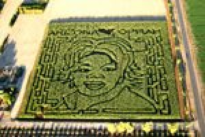 Q.C. farm features corn likeness to Winfrey