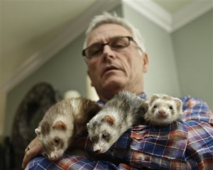Pat Wright ferret