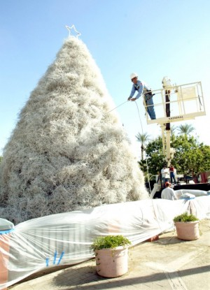 Chandlers Tumbleweed Tree Lighting Ceremony