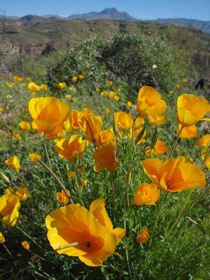 Hiking 'bingo!': '60 Hikes Within 60 Miles'