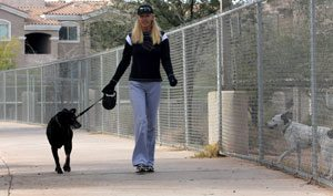 Retriever breeds fetch top spots in city dogdom