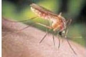 County is abuzz about mosquitoes