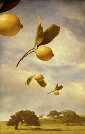 Flock of Lemons by Linda Ingraham