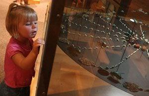Science Center's exhibit features creepy crawlies