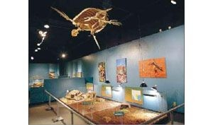 From prehistory to the Space Age, Mesa Southwest Museum chronicles Arizona's contributions
