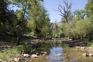 Riparian Eden joins national forest