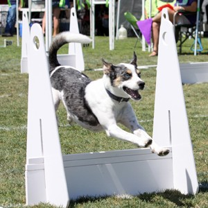 Woofstock in Chandler