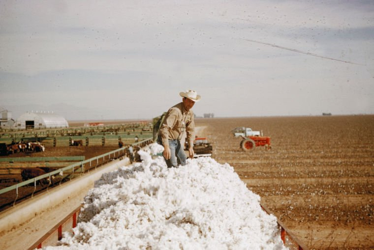 Cotton stomper