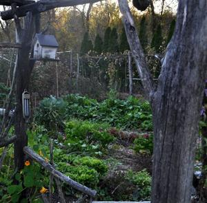 Gardening-Autumn Greenery