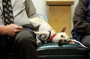 Little dog a big problem at animal shelters